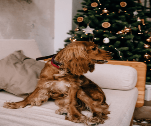 New Year Resolutions For Your Pup